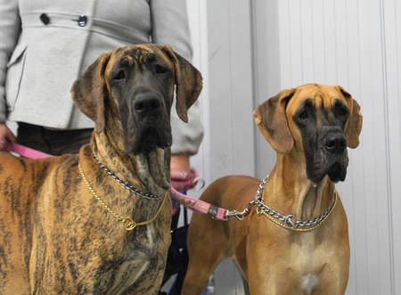 dogs brothers at exhibition