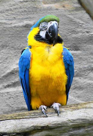 Sitting Parrot Stock Photo