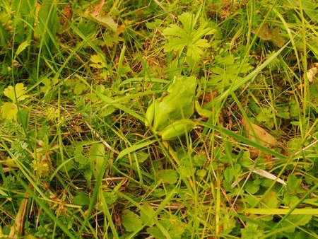 frog-lively barometer-camouflage