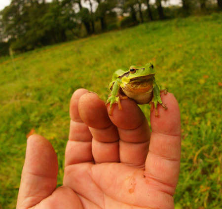 frog-lively barometer of the fingers 6