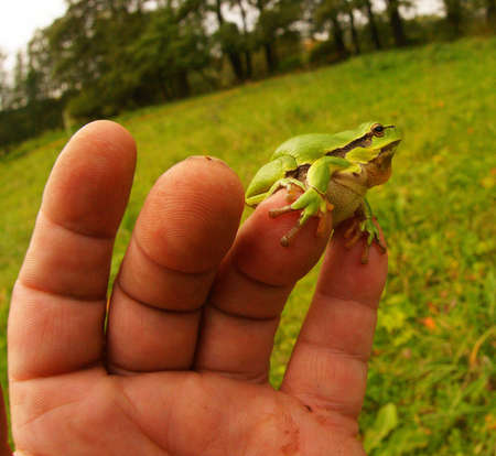frog-lively barometer of the fingers 5