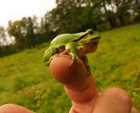 frog-lively barometer of the fingers 2