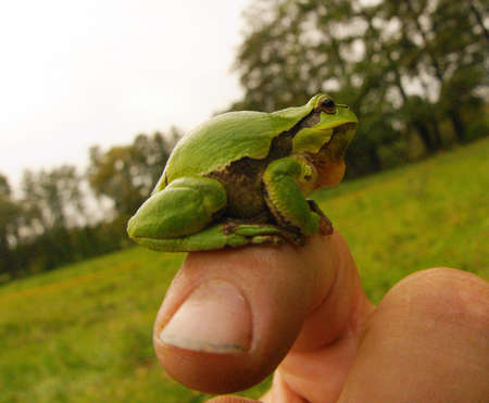 frog-lively barometer of the fingers 1