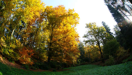 The colors of autumn in the forest park