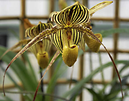 Series of images of botanical orchid garden in Prague