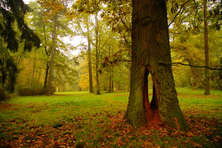 Autumn in the park Pruhonice Stock Photo