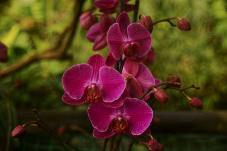 Pictures of orchid exhibition in Prague Botanical Garden in Troja greenhouse  Fata Morgana  photo