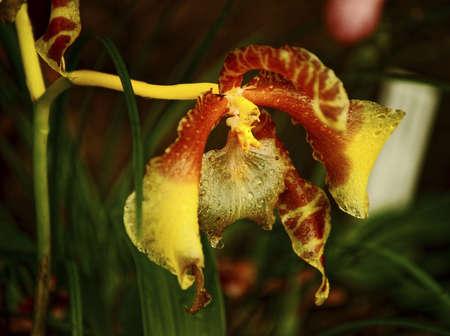fata morgana: Pictures of orchid exhibition in Prague Botanical Garden in Troja greenhouse Fata Morgana