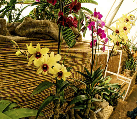 fata morgana: Pictures of orchid exhibition in Prague Botanical Garden in Troja greenhouse Fata Morgana