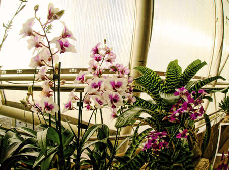 Pictures of orchid exhibition in Prague Botanical Garden in Troja greenhouse Fata Morgana