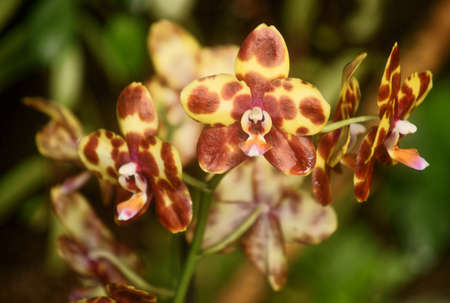 fata morgana: Pictures of the Prague exhibition of orchids in the botanical garden in Troja greenhouse  Fata Morgana