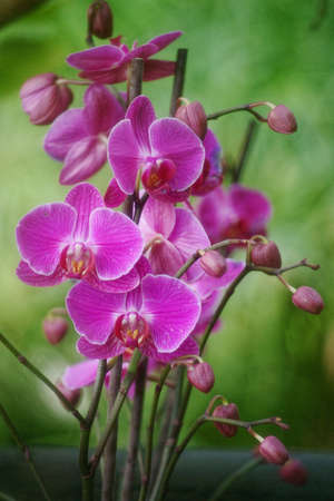 Pictures of the Prague exhibition of orchids in the botanical garden in Troja greenhouse Fata Morgana photo