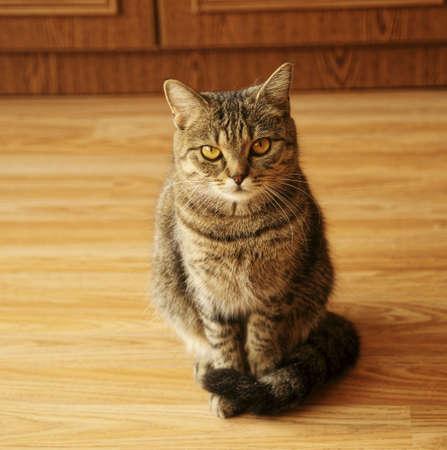 집에있는 고양이 스톡 콘텐츠