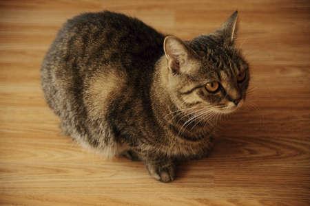 가정의 고양이