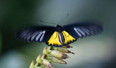Tropical butterfly exhibition in Prague-Troja Stock Photo