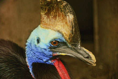 cassowary: Southern Cassowary - A powerful bird in the Prague zoo