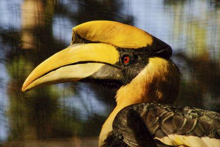 Hornbill photo