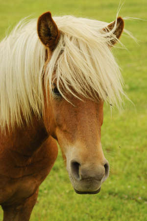 Pictures of horses on pasture Stock Photo