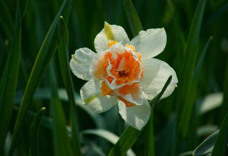 Spring in the garden dendrologic in Pruhonice Stock Photo
