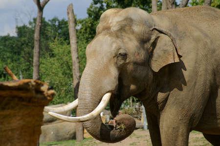 Elephant family in Prague zoo