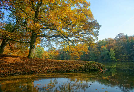 pictures of autumn walks in the park
