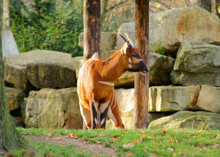 ungulates: Pictures from Prague  Stock Photo