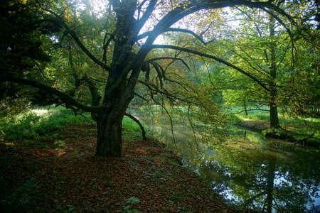 stil zijn: Stille ochtend in het park