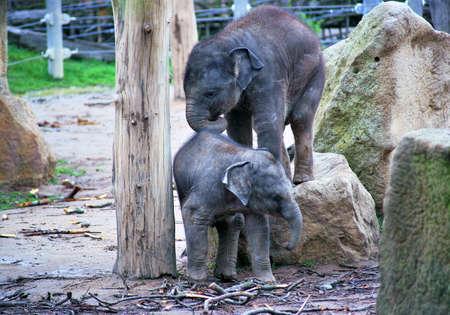elephant children