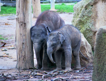elephant children