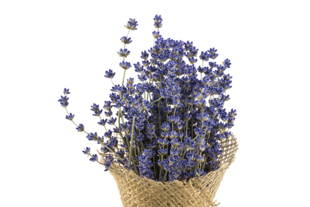 lavande: Detail on Arranging Dried Lavender on a Isolated White Background
