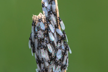 Cluster Flies with Pearl Wings on the green background