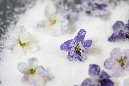 sweet candy - candied white and purple violet flower on sugar