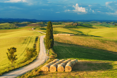 podere: Cypress on the road in the middle of the Tuscan countryside on a summer day  Stock Photo