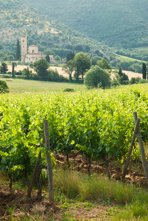 Old monastery SantAntimo among the vineyards in Tuscany, Italy photo
