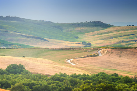 Trees, fields and atmosphere in Tuscany, Italy photo