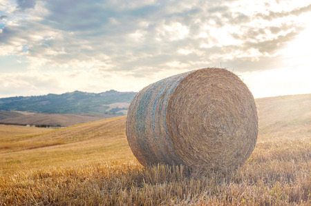 Summer harvest on the Tuscan fields in Val dOrcia, Italy photo