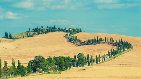 The old cypress road to the farm between fields in Tuscany, Italy photo
