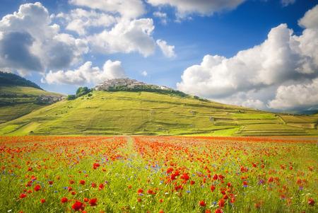 castelluccio: Summer day in the beautiful and colorful area of Castelluccio di Norcia, Italy Stock Photo