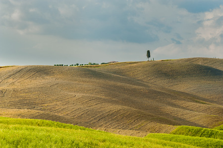 Fields and peace in the warm sun of Tuscany, Italy photo