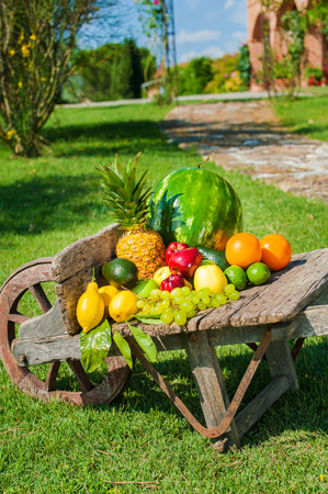 Juicy and colorful fresh fruit arranged on a wooden wheelbarrow in a green garden. photo