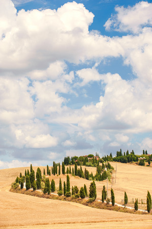 Typical Tuscan road surrounded by cypress trees and fields in summer, Italy photo