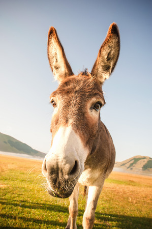Donkey eating the grass in the foothills of the Monte Sibillini National Park, Umbria