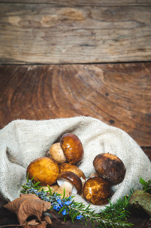 Forest mushrooms in the rural bag photo