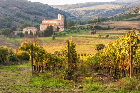 sant'antimo: Monastery SantAntimo in the vineyards of Brunello, near Montalcino, Italy