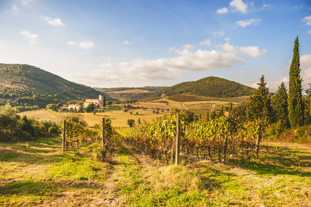 Italian medieval church between vineyards