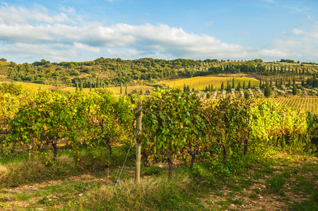 Autumn colors on the Tuscan fields photo