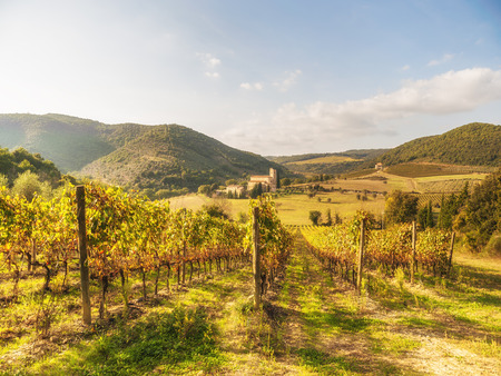 montalcino: Italian medieval landscapes