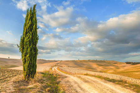 terrapille: Solitary cypress guardian of the road