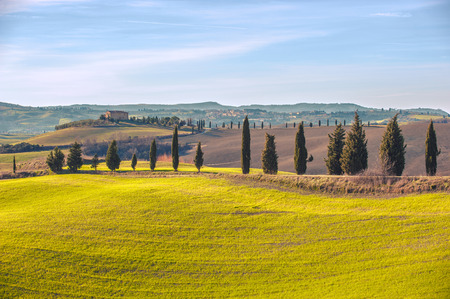 Artistic Tuscan landscape with cypresses, wavy fields and house in the background.
