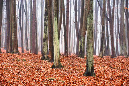 magical forest: Enchanted and magical forest landscape